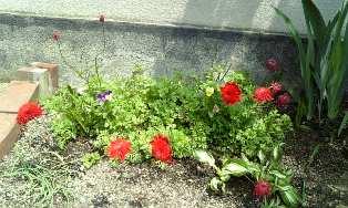 赤花.jpg