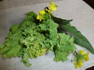 20121221002a菜の花2種