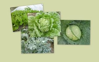 20121202野菜類ブログ用