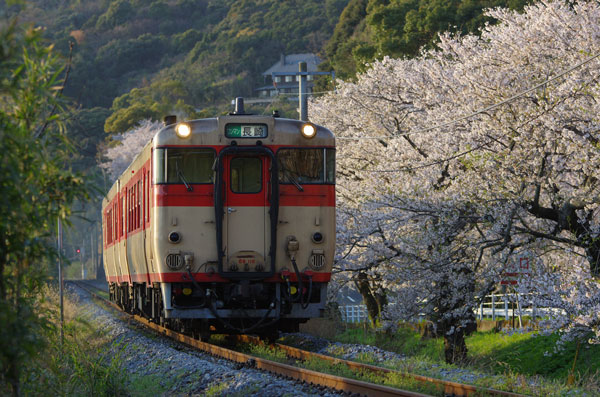 120406higashisono-okusa221D.jpg