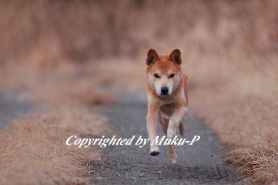 IMG_2607_20120122.jpg