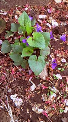 0421flowers.jpg