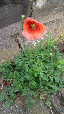 0421flowers2.jpg