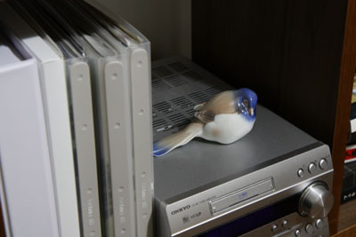 shelf_bird.jpg