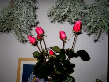 tnH25-12-03バラの切り花 (2)