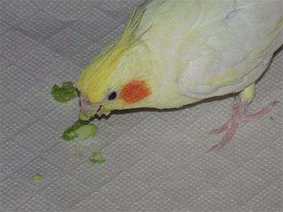piro20110917-4.jpg