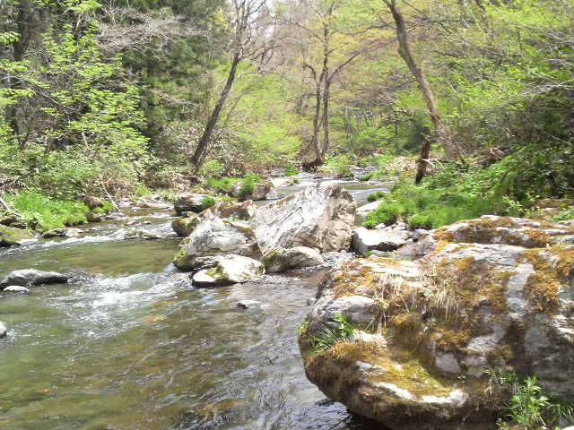 渓流 米内川