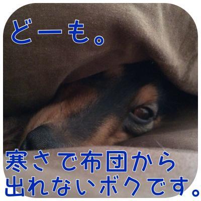 IMG_0995_convert_20140205162428.jpg