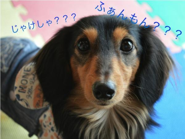 yuito_convert_20140209144526.jpg