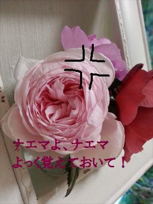ナエマ_R