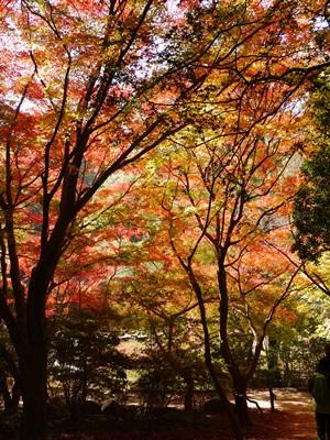 森林植物園-4