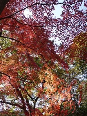 森林植物園-7