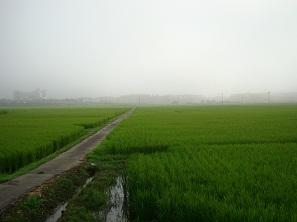 DSC00128タゲリの田んぼ