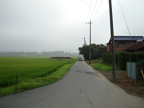 DSC00129タゲリの田んぼ