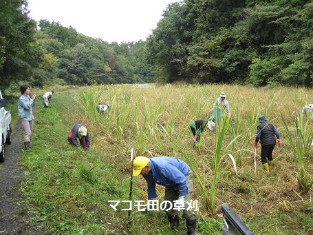 草刈ボランティア2