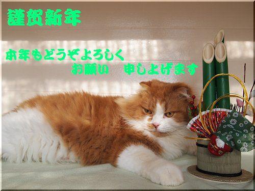 2012010101maro.jpg