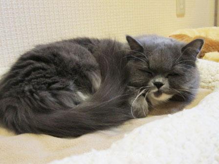 猫ベッドスキ・・・