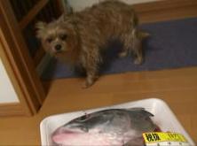なな 鮭の怖い.JPG
