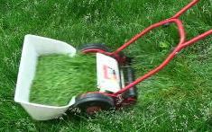 芝刈り中.JPG