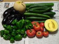 野菜どっさり.JPG