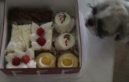 ふく ケーキをガン見.JPG