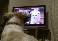 ふく テレビ好き.JPG