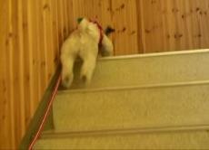 ふく 階段をダッシュ.JPG