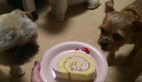 ロールケーキをガン見.JPG