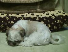 ふく 眠い.JPG