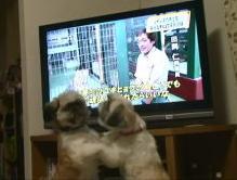 テレビ6.JPG