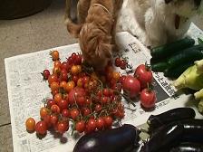 野菜17.jpg