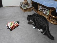 猫用おもちゃ.jpg