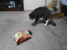 猫用おもちゃ2.jpg