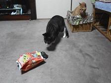 猫用おもちゃ3.jpg
