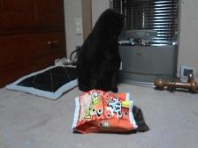 猫用おもちゃ4.jpg