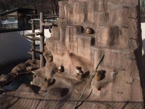 桐生が岡動物園8