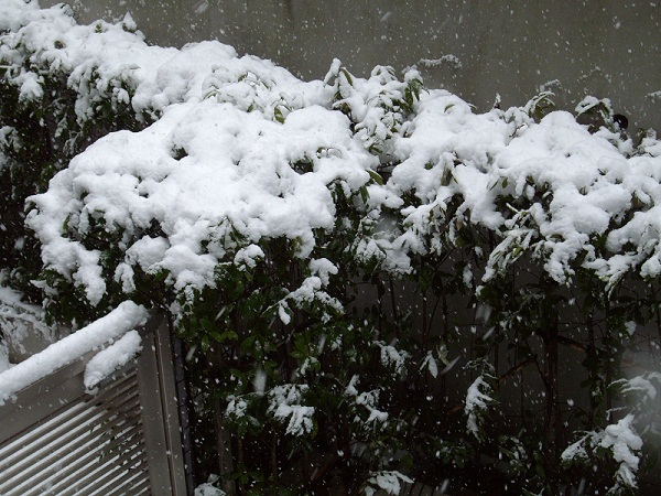 雪120229