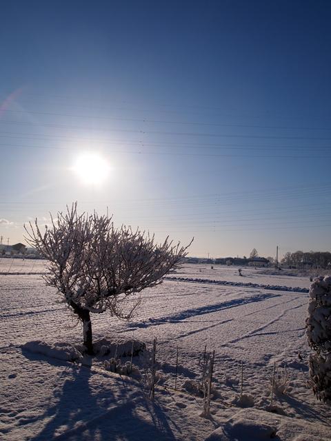 初雪5縮小後