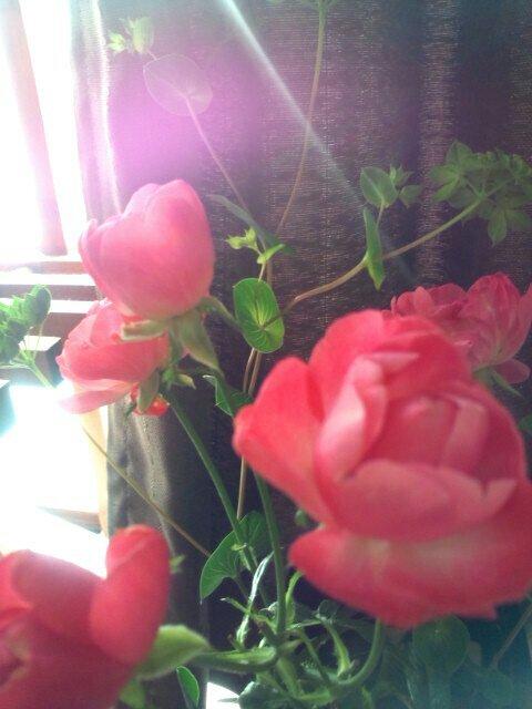 PicsPlay_1355441336765.jpg