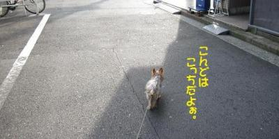 1+(30)_convert_20111001230558.jpg