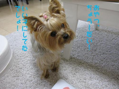 ・廟convert_20110926224241