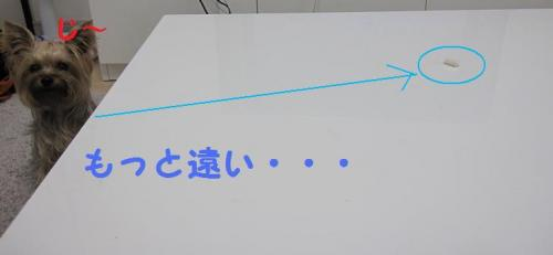 ・托シ胆convert_20111012200754