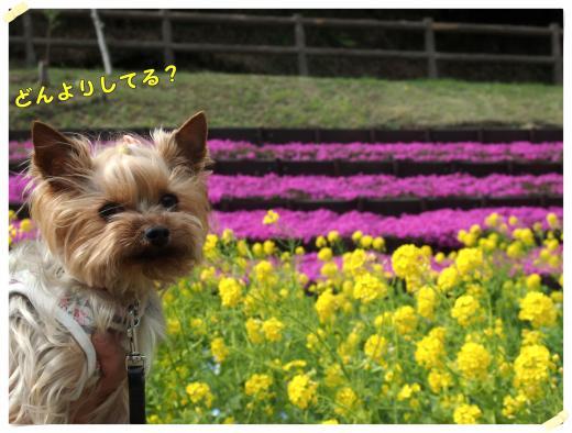 5_convert_20120416221946.jpg