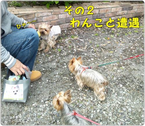DSC_0036_convert_20120417225007.jpg
