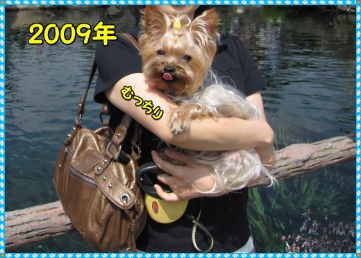 IMG_0982_convert_20120315220815.jpg