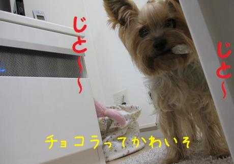 IMG_3916_convert_20111018205750.jpg