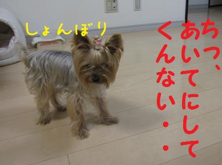 IMG_3930.jpg