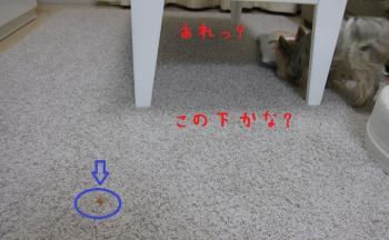 IMG_4173_convert_20111011231944.jpg