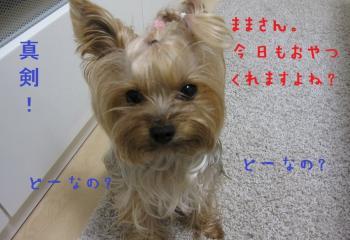 IMG_4243_convert_20111011230324.jpg