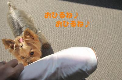 IMG_4340_convert_20111008151934.jpg